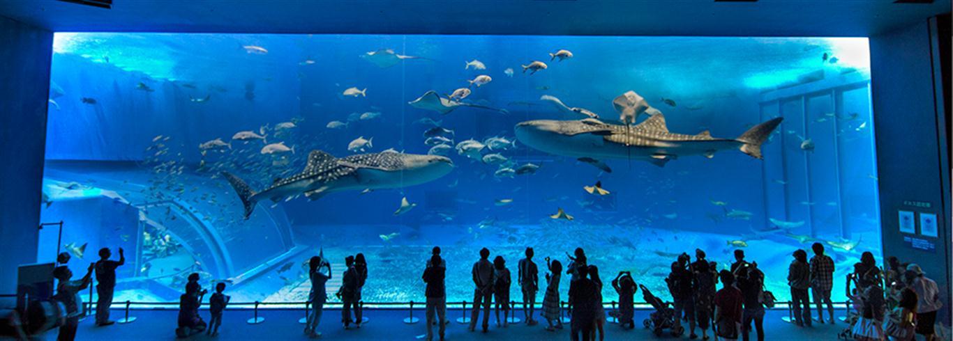 4 Akuarium Terbesar Di Dunia Gogoo Tour